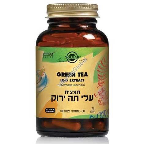 תמצית עלי תה ירוק 60 כמוסות צמחיות - סולגאר