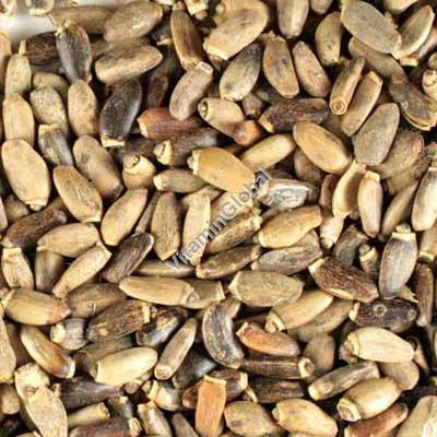 זרעי גדילן 500 גרם - ביו בריק